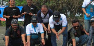 Pertamax Enduro Jelajah Energi Negeri Lepasliarkan 50 Ekor Penyu Hijau